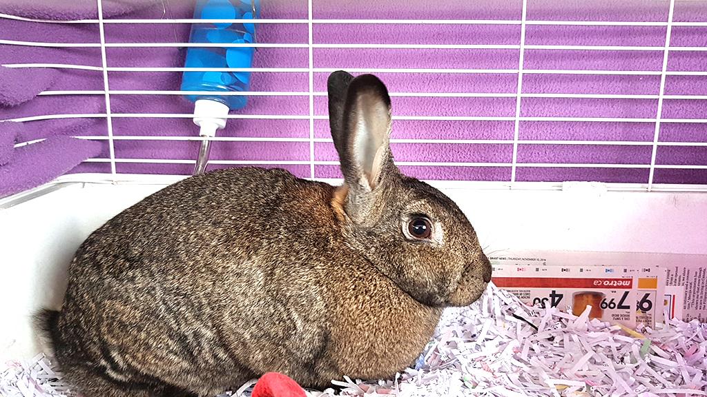 SPCA_bunny