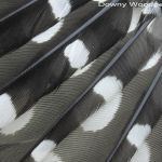 Downy Woodpecker primary flight feathers female