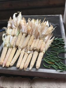 """The Tuscarora White came as a gift from them but we also have our own line of Six Nations White, Yellow, Blue, Black and Red corns we brought here from the Mohawk Valley. Locally many varieties were created including the """"Six Nations Calicos"""", which are multi-coloured corns in hues of reds and blues."""